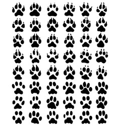 black print of dogs paws vector image