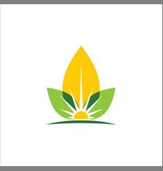 Eco leaf sun organic logo vector