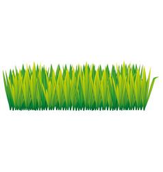 Green tall grass icon vector