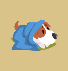 jack russell puppy character lying on the floor vector image vector image