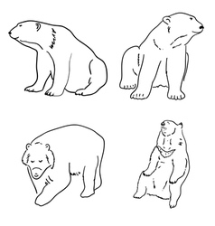 set drawings grizzly bears and white white vector image