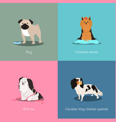 Set of dogs different breed vector