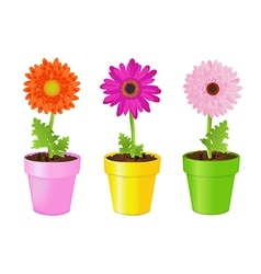 Colorful Daisies In Pots vector image
