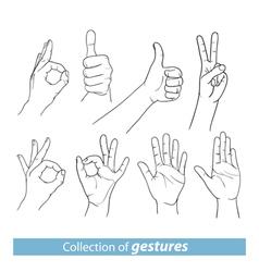 Gestures of human hands vector image vector image