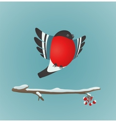 Bullfinch Flying and Ashberry Twig vector image vector image