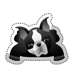 Cute french bulldog icon vector