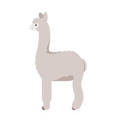 flat style of lama vector image