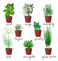 herbs in pots vector image