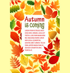 autumn fall leaves poster template vector image