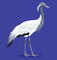 Demoiselle crane cartoon vector