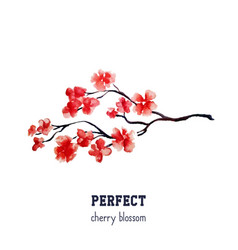 Realistic red sakura blossom - japanese red cherry vector