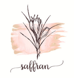 saffron sketch on watercolor paint hand drawn ink vector image