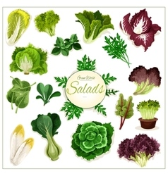 Salad greens leafy vegetables poster vector image