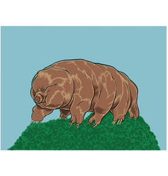tardigrade or water bear vector image