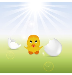 Cute Chick with Eggshells vector image
