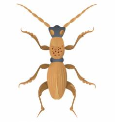 insect vector image vector image