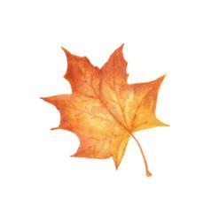 Autumn leaf watercolor texture vector