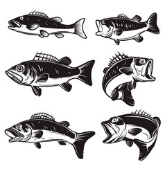 set bass perch fish isolated on white vector image