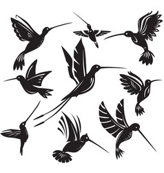 set silhouettes flying hummingbirds vector image