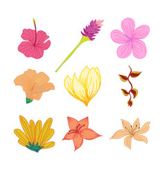 various tropical flowers hand drawn set vector image