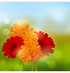 Gerbera Flower Background vector image