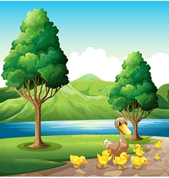 A family of duck at the riverbank vector image vector image