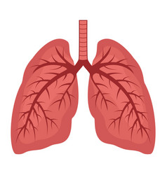 human lungs flat icon vector image