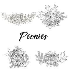 Set of bouquets of peonies vector