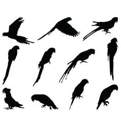 Black silhouettes parrots vector