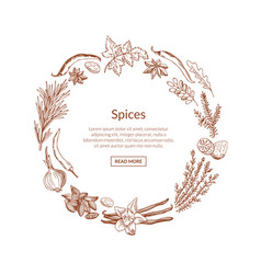hand drawn herbs and spices vector image