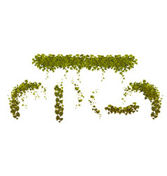 ivy climbing vines with green plant leaves set vector image