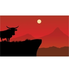Silhouette of bull on the cliff vector