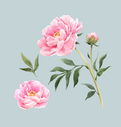 Watercolor peony flowers vector