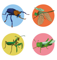 insects in vector image