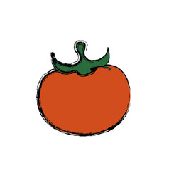 fresh tomato vegetable vector image vector image