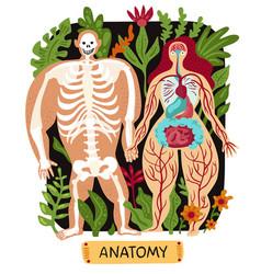 human anatomy set vector image