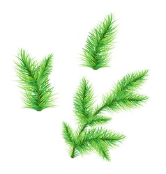 FirTree Branch vector