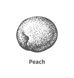 hand-drawn peach vector image