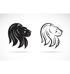 Lions head vector image