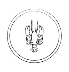 Monochrome blurred line contour with lobster in vector