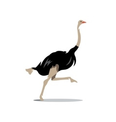 Ostrich Cartoon vector