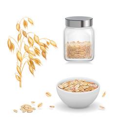 Oats oat flakes in glass oatmeal and muesli vector