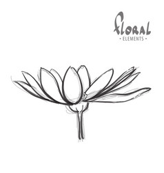 gerbera on a white background vector image vector image