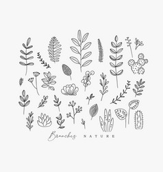 floral leaves set white vector image