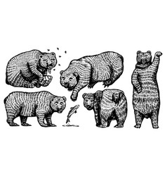 grizzly bear set collection hunting brown wild vector image