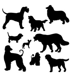 Silhouettes dogs different breeds vector