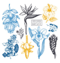 tropical flowers in color sketches collection vector image