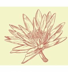 lily sketch vector image vector image