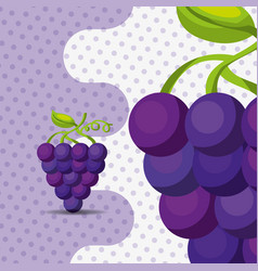 fresh fruit natural bunch grapes on dots vector image