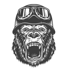 head of gorilla vector image